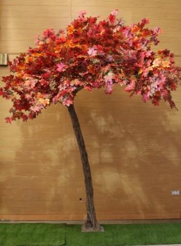 Autumn Leaf Canopy Trees
