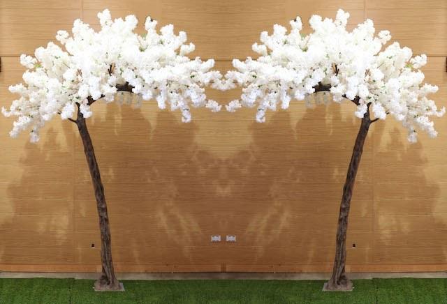 Ivory Blossom Canopy Trees