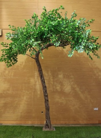 Ficus Leaf Green Canopy Trees