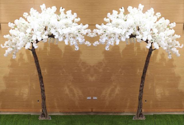 Blossom Canopy Trees
