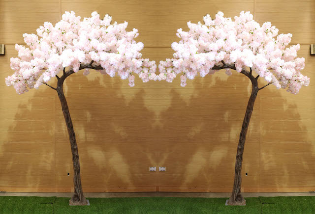 Blush Pink Blossom Canopy Trees